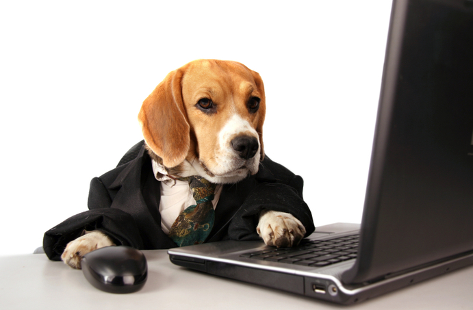Can You Really Trust Online Vet Tech Programs?