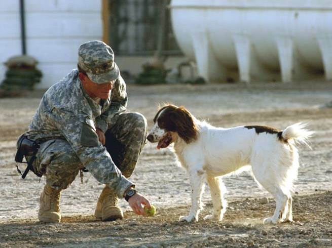 Becoming An Army Veterinary Technician
